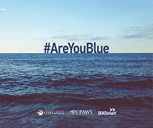Wild Life Org - are You Blue