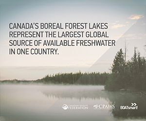 Wild Life Org - Boreal Forest 1