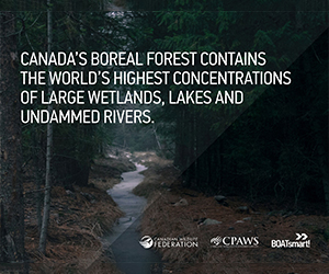 Wild Life Org - Boreal Forest 2